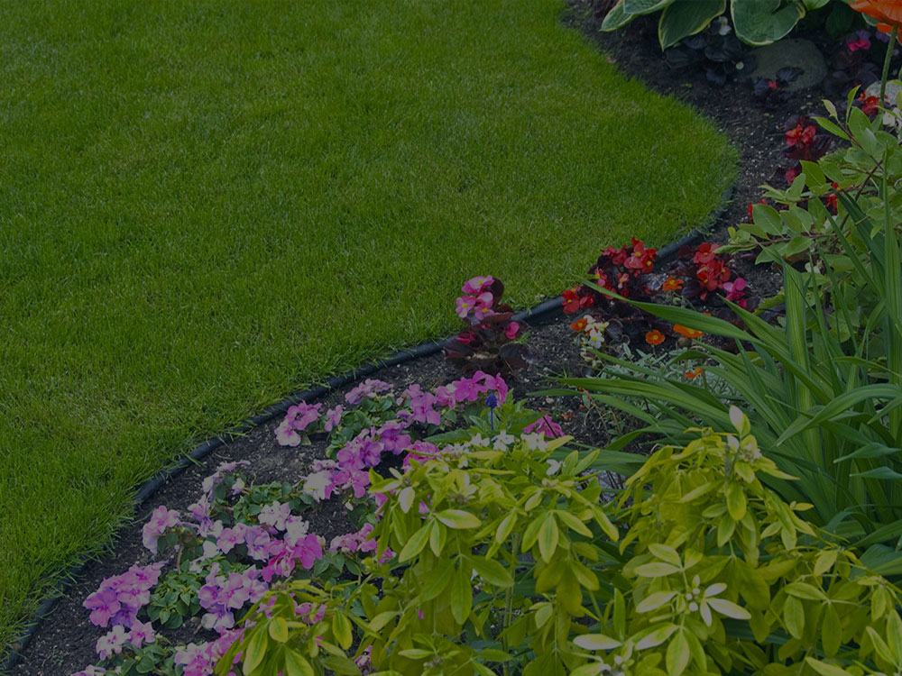 Sterling Garden Design