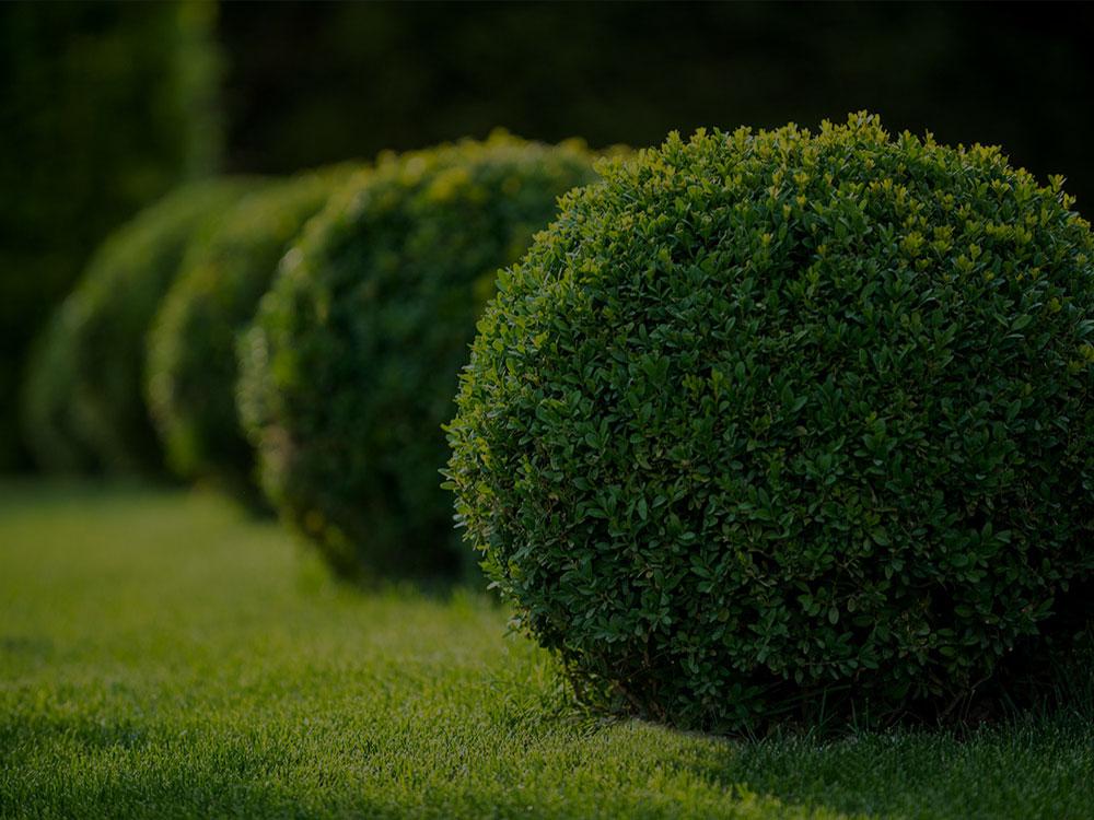 Manassas Landscaping