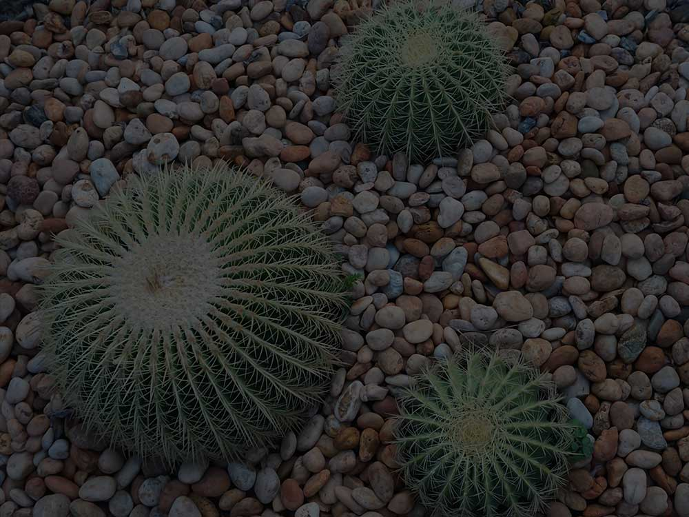 McLean Xeriscaping